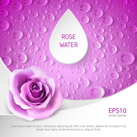 Square pink banner with roses and drops. Template for advertising rose water. Ilustrace