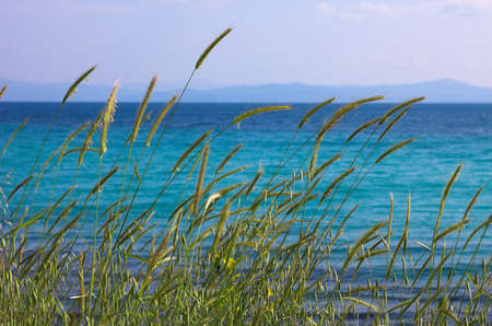 High grass near the sea Stock Photo - 429209