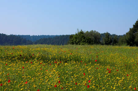 Grass field and poppies Stock Photo - 429201