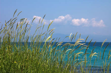 High grass and clouds near the sea Stock Photo - 429199