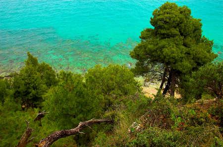 pine creek: Pines near the seaside, Hilkidiki, Greece