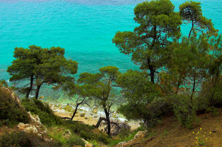 sandbank: Pines near the coast, Hilkidiki, Greece Stock Photo