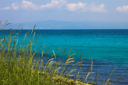 Some grass near the sea, Greece Stock Photo - 473230