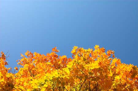 Orange maple leaves below photo