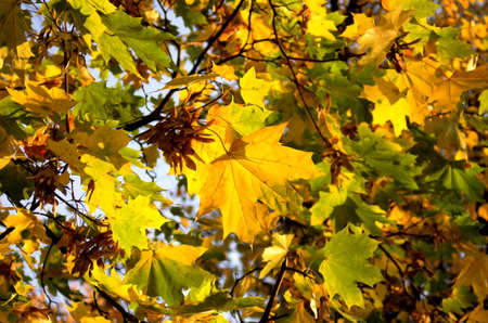 Autumn leaves background Stock Photo - 558071
