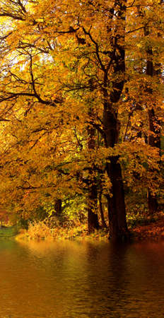 Autumn tree in the forest near water Stock Photo