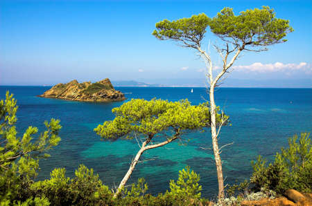 pine creek: Landscape with pines on the island of the Cote dAzure, France