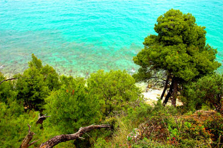 Pine trees near the sea, Greece Stock Photo - 773162