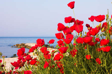 Poppies on the beach, Greece photo