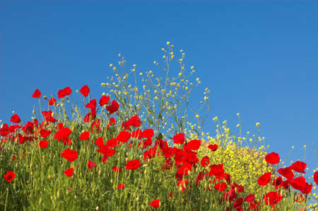 Red poppies and yellow flowers, Greece Stock Photo - 773152