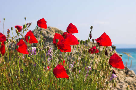 Red poppies and stone near the sea, Greece Stock Photo - 773153