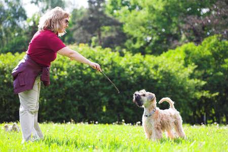 Woman ad her dog on green grass (Irish soft coated wheaten terrier) Stock Photo
