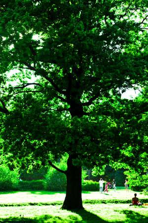 insolaci�n: ver a los grandes �rboles verdes y la gente jugando debajo de la misma
