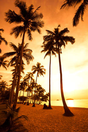 chang: Coconut palms on sand beach in tropic on sunset. Thailand, Koh Chang, Kai Bae beach Stock Photo