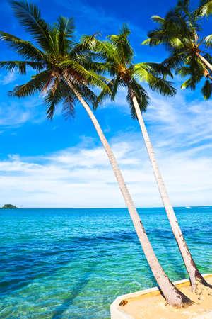 Coconut palms on sand beach in tropic. Thailand, Koh Chang, Klong Prao beach
