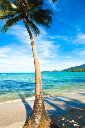 klong: Coconut palm on sand beach in tropic. Thailand, Koh Chang, Klong Prao beach
