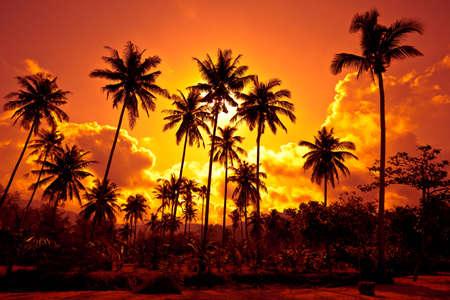 sunup: Coconut palms on sand beach in tropic on sunset. Thailand, Koh Chang, Klong Prao beach