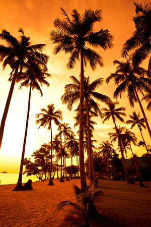 Coconut palms on sand beach in tropic on sunset. Thailand, Koh Chang, Kai Bae beach Stock Photo