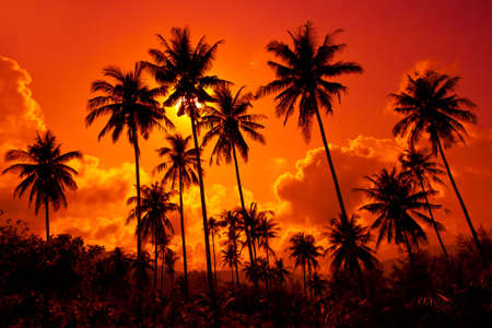 Coconut palms on sand beach in tropic on sunset. Thailand, Koh Chang, Klong Prao beach Stock Photo - 6512605
