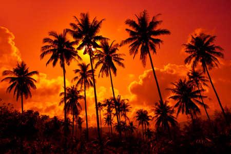 Coconut palms on sand beach in tropic on sunset. Thailand, Koh Chang, Klong Prao beach Stock Photo - 6512605