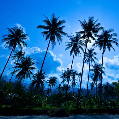 Palm forest silhouettes on blue sky photo