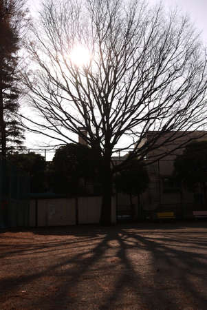 Shadow casting over a tree in Tokyo Stock Photo - 27895634