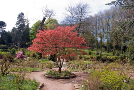 A Tree with Red Blossom in an English Country House Garden Stock Photo - 9072030