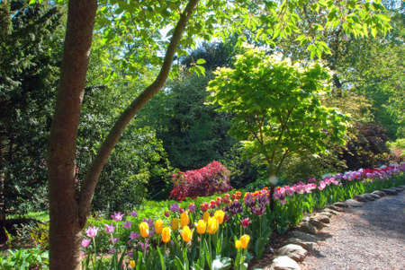 A Woodland Glade in Spring with Red Pink and Yellow Tulips Stock Photo - 9464950
