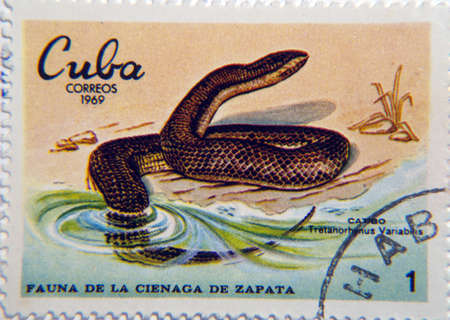 slither: Cuba circa 1969 a postage stamp of 1Peso circa 1969 showing a Caribbean Water Snake Tretanorhinus variabilis