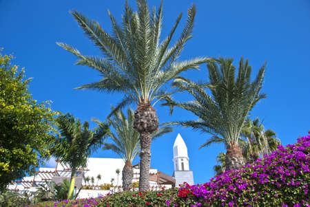 A Traditional Canary Island Bell Tower Palm Trees and Bougainvillea Stock Photo - 11787079
