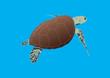 A Hawksbill Sea Turtle Swimming in Open Water Vector