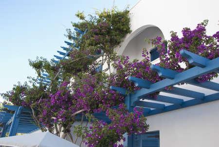 Purple Bougainvillea growing up a Blue Balcony in Greece Stock Photo - 14102756