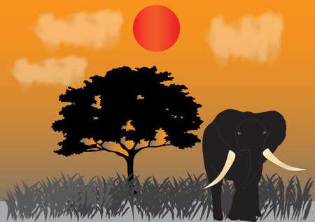 plants species: Un elefante sotto il sole al tramonto nella savana, con un albero di acacia in background