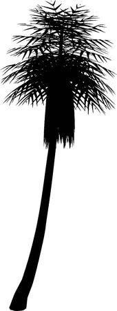 Palm tree, black