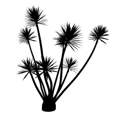 Black a flower