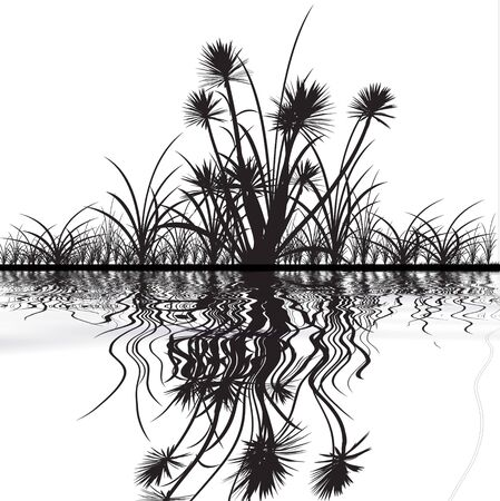 Silhouettes of grass with the reflection. Stock Photo