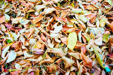 texture of the color of autumn leaves