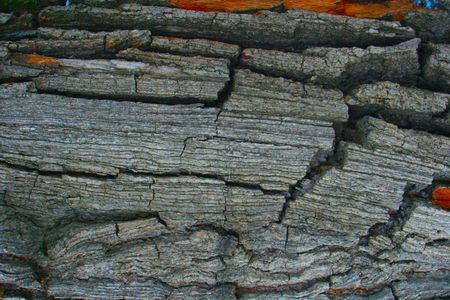 Structure of a bark of a tree close up Stock Photo