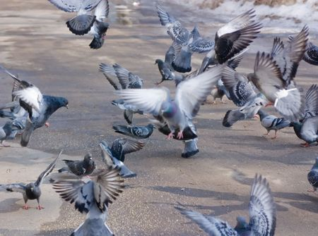 sity: a flying birds  in a sity on a road