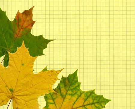 a yellow and green maple leave over yellow paper sheet background photo