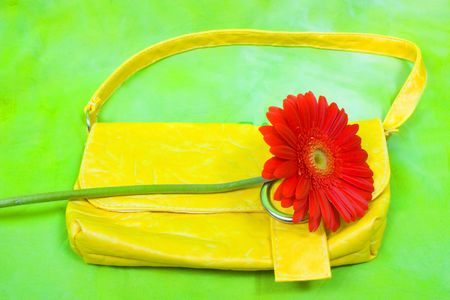 habiliment: Slill life of red gerbera and wellow purse