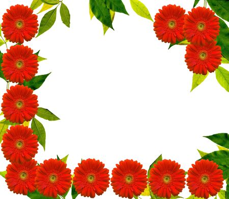 Summer frame with red Gerbera Flowers and green leaves photo