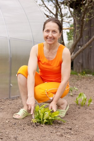 senior  woman gardener with flowers outdoor in her garden photo