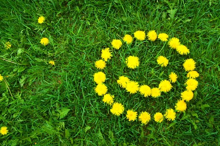 smiley face  of yellow dandelions at summer day