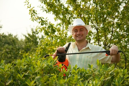 working man with  garden pruner against summer time in garden Stock Photo