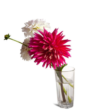 White and pink flowers in vase on  white background. Stock Photo - 8231702