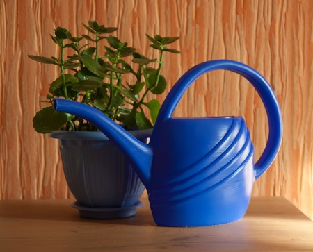 aspidistra: Morning still life with pot flower at home Stock Photo