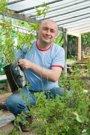 horticulturist: male gardener with seedlings in the greenhouse