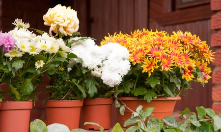 colorful flowers in pots standing on the porch Stock Photo - 13119529