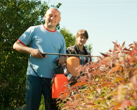 살균제: 곤충에서 성인 남성과 여성 뿌려 나무